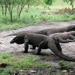Wisata eksotis ke pulau Komodo