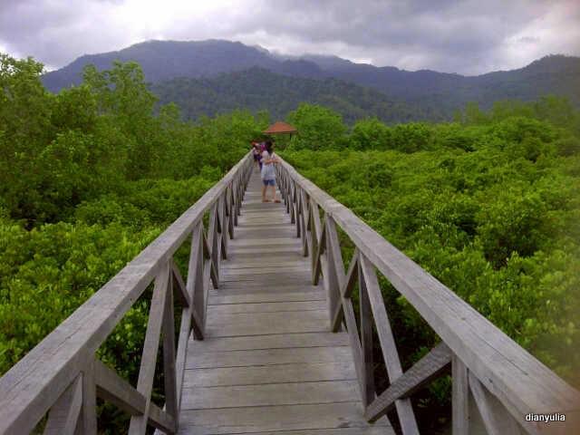 Hutan Bakau Pancer Cengkrong