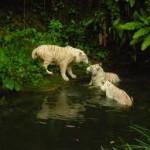 Taman Safari Singapura, Melihat kehidupan Binatang dari Pagi hingga Malam Hari