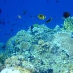 Menyusuri alam bawah laut di Bunaken