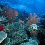 Raja Ampat, Tempat Diving Terindah di timur Indonesia